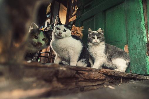 Stray Animal「Family of Cats」:スマホ壁紙(9)