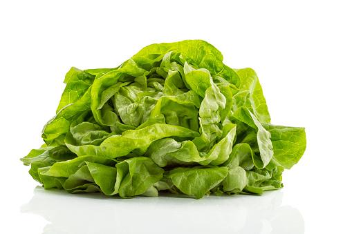 Colored Background「Butterhead lettuce」:スマホ壁紙(15)