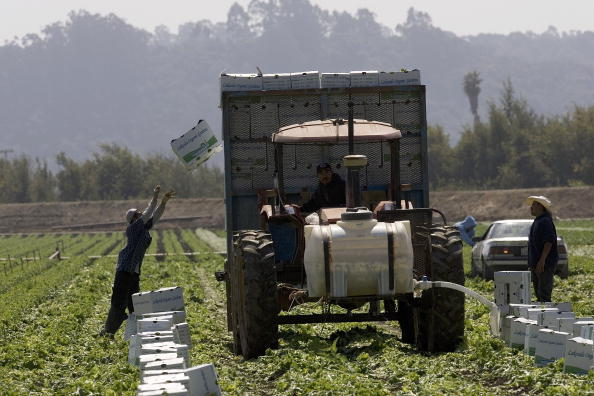 David Paul Morris「Spinach Growers Tally Losses As E. Coli Investigation Continues」:写真・画像(7)[壁紙.com]
