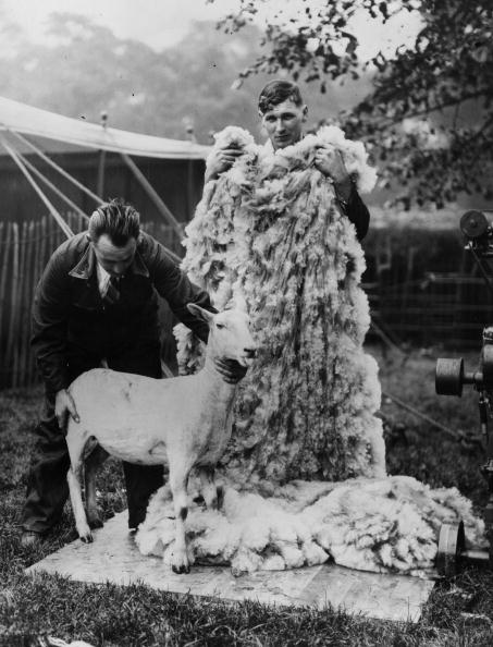 Participant「Sheep Shearers」:写真・画像(16)[壁紙.com]