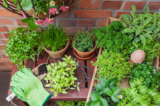 Planting「Various potted spice plants on terrace」:スマホ壁紙(15)