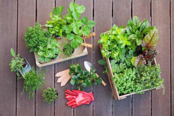 Various potted spice plants on terrace:スマホ壁紙(壁紙.com)