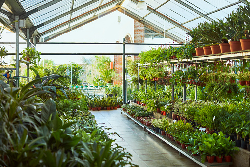 Rack「Various potted plants arranged in greenhouse」:スマホ壁紙(12)