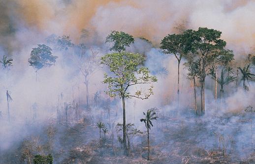 Amazon Rainforest「Amazon fires」:スマホ壁紙(13)