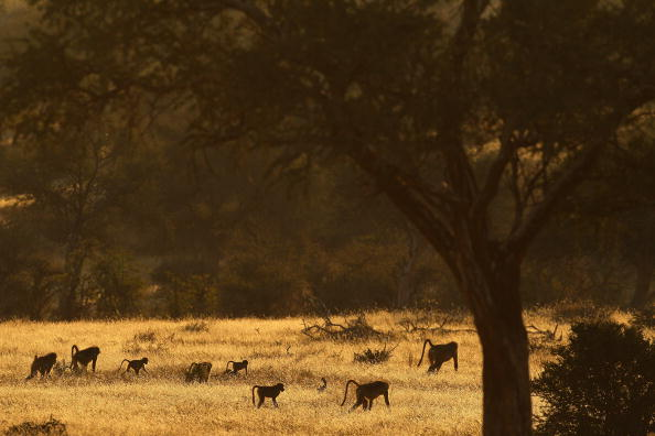 The Natural World「An African Safari」:写真・画像(12)[壁紙.com]