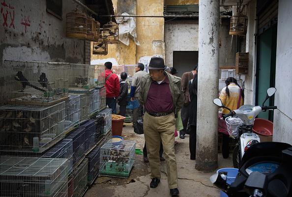 Animal Themes「Daily Life In Kunming」:写真・画像(19)[壁紙.com]