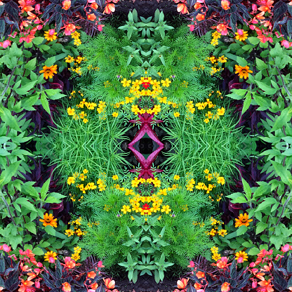 Intricacy「Flower Mandala」:スマホ壁紙(11)
