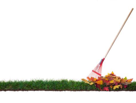 かえでの葉「絶縁熊手、リーブズ片上の芝生」:スマホ壁紙(4)