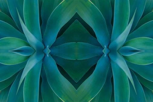 Symmetry「Digital flipping Agave Plant into a design」:スマホ壁紙(18)