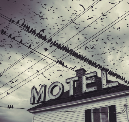 Ghost Town「The Bird Motel」:スマホ壁紙(4)