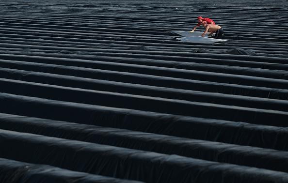 Beelitz「Asparagus Season Underway In Beelitz Region」:写真・画像(7)[壁紙.com]