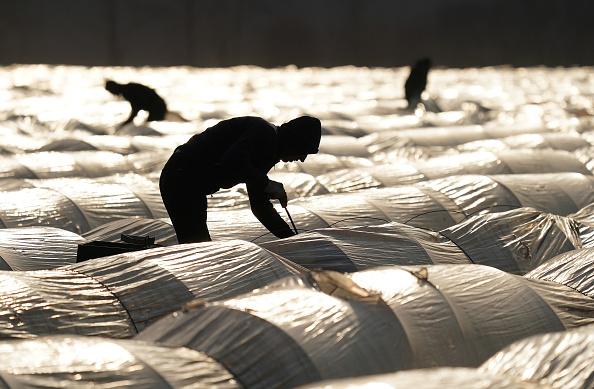田畑「Farmers, Dependent On Foreign Workers, Face Uncertainty During Coronavirus Crisis」:写真・画像(2)[壁紙.com]