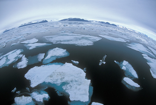 Pack Ice「Norwegian Arctic Svalbard, Spitsbergen, pack ice with flying seagull」:スマホ壁紙(8)