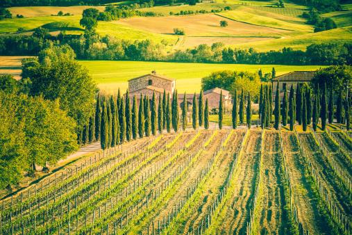Val d'Orcia「Tuscany Farmhouse and Vineyards, Chianti Region」:スマホ壁紙(2)