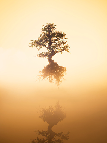 Surreal「Floating tree over water at dawn」:スマホ壁紙(19)