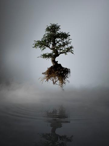 Surreal「Floating tree above lake in mist」:スマホ壁紙(7)