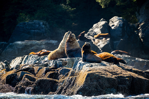Sea Lion「sea lion」:スマホ壁紙(12)