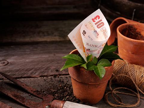 Planting「Ten Pound Growing in a Plant Pot」:スマホ壁紙(11)