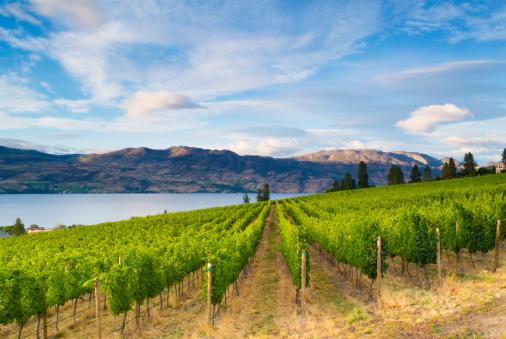 British Columbia「Wine Country Vineyards Along Lake」:スマホ壁紙(17)