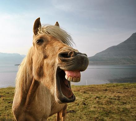 Horse「Iceland, eskifjordur, Portrait of Icelandic horse by lake」:スマホ壁紙(10)