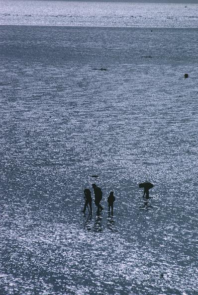 Shallow「Pegwell Bay」:写真・画像(6)[壁紙.com]