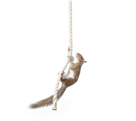 Squirrel「Squirrel on rope」:スマホ壁紙(12)