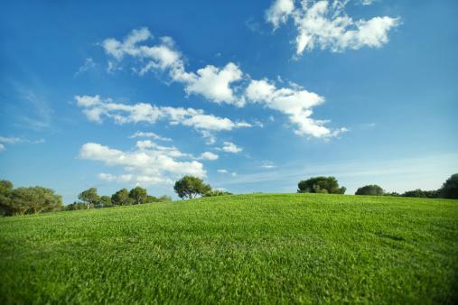 Natural Parkland「Landscape」:スマホ壁紙(5)
