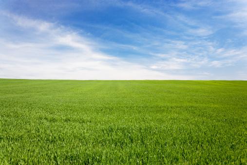 Freedom「Green meadow field under a blue sky with clouds」:スマホ壁紙(11)