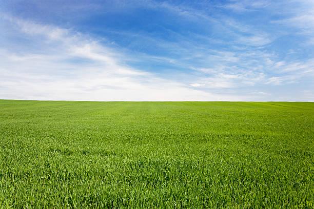 Green meadow field under a blue sky with clouds:スマホ壁紙(壁紙.com)