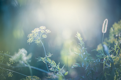 Pastel「Morning in the field」:スマホ壁紙(1)