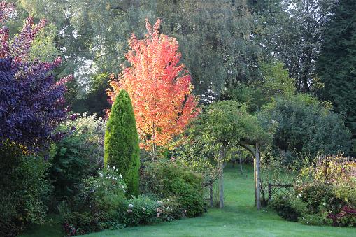 かえでの葉「English domestic garden with brightly lit autumnal maple tree.」:スマホ壁紙(13)