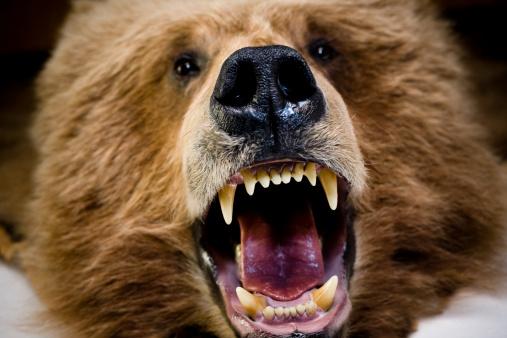 質感「Bear Face And Teeth」:スマホ壁紙(10)