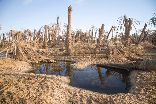 El Siwa「Dried Up Palm Trees And Salt Water On The Outskirts Of Siwa At The Siwa Oasis; Siwa Egypt」:スマホ壁紙(13)