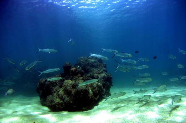 Donald Miralle「Coral Reefs In Danger」:写真・画像(18)[壁紙.com]