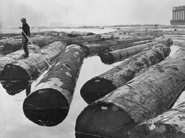 British Columbia「Floating Logs」:写真・画像(16)[壁紙.com]