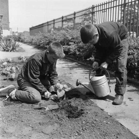 Recreational Pursuit「Young Gardeners」:写真・画像(14)[壁紙.com]