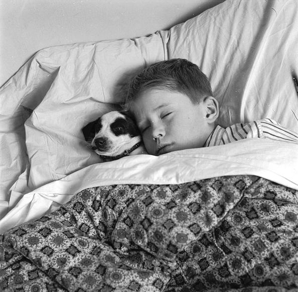 Pets「Dog Tired」:写真・画像(17)[壁紙.com]