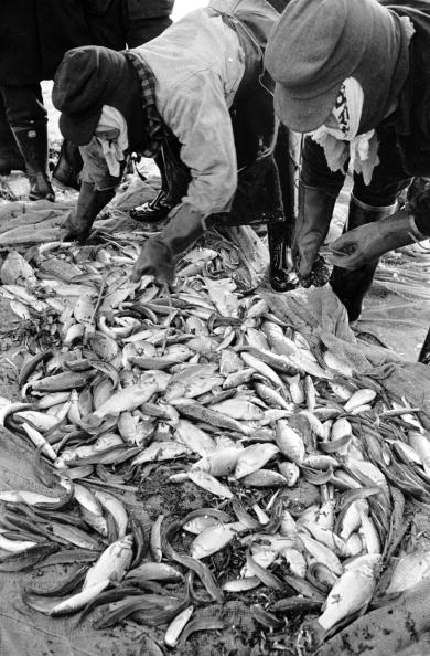 Japan「Japanese Fishermen」:写真・画像(7)[壁紙.com]