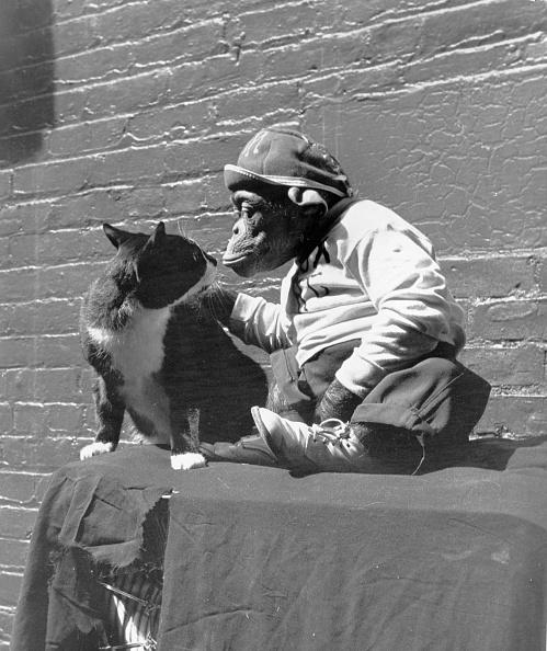 Animal「Animal Friends」:写真・画像(7)[壁紙.com]