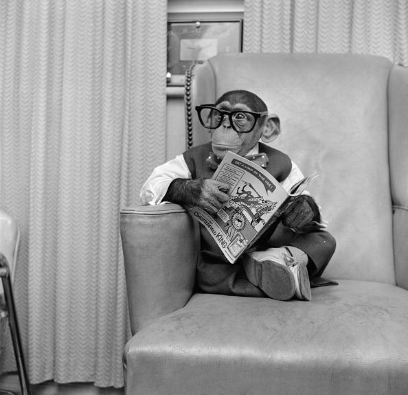 Animal「Clever Monkey」:写真・画像(2)[壁紙.com]