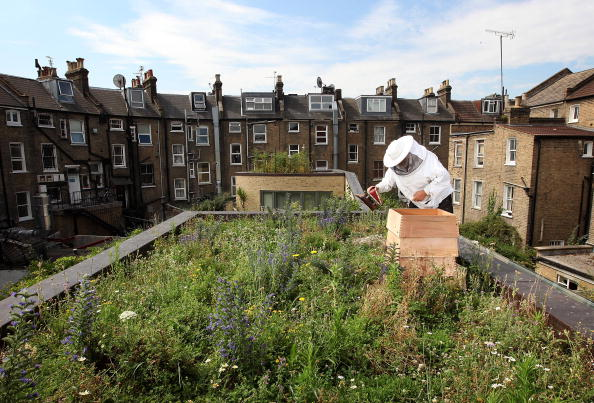 City「Urban Beekeeping On East London Rooftops」:写真・画像(14)[壁紙.com]