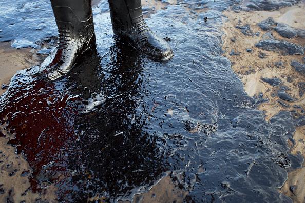 Animal Themes「Ruptured Pipeline Spills Oil Along Santa Barbara Coast」:写真・画像(1)[壁紙.com]