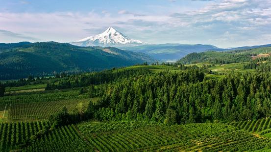 Volcano「Aerial Farmland with beautiful view of the Mount Hood」:スマホ壁紙(10)