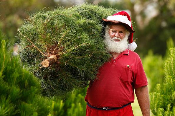 Tree「Sydneysiders Head To Sydney Christmas Tree Farm」:写真・画像(16)[壁紙.com]