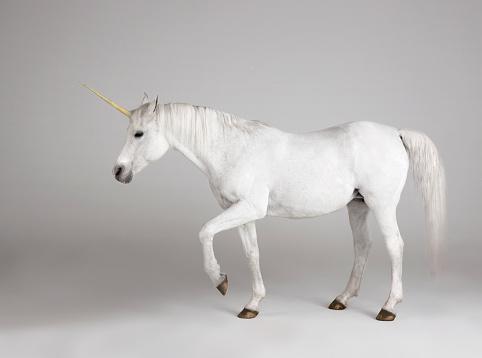 Horse「White Unicorn」:スマホ壁紙(2)