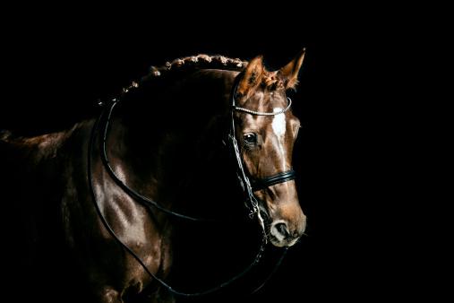 Dressage「Chestnut dressage horse groomed for a contest」:スマホ壁紙(17)