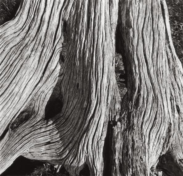 Log「Juniper, Seiseralm」:写真・画像(10)[壁紙.com]