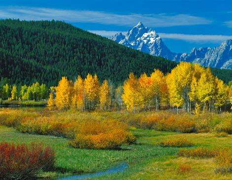 Aspen Tree「Grand Teton National Park in autumn」:スマホ壁紙(2)