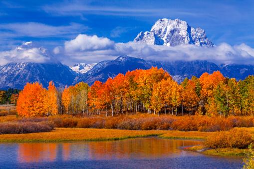 Aspen Tree「Grand Teton National Park, Wyoming」:スマホ壁紙(19)