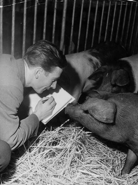 Animal Themes「Pig Sketching」:写真・画像(14)[壁紙.com]